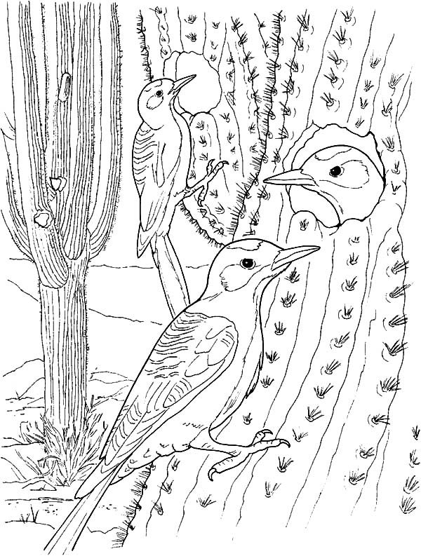 Cactus, : Cactus Bird House Coloring Pages