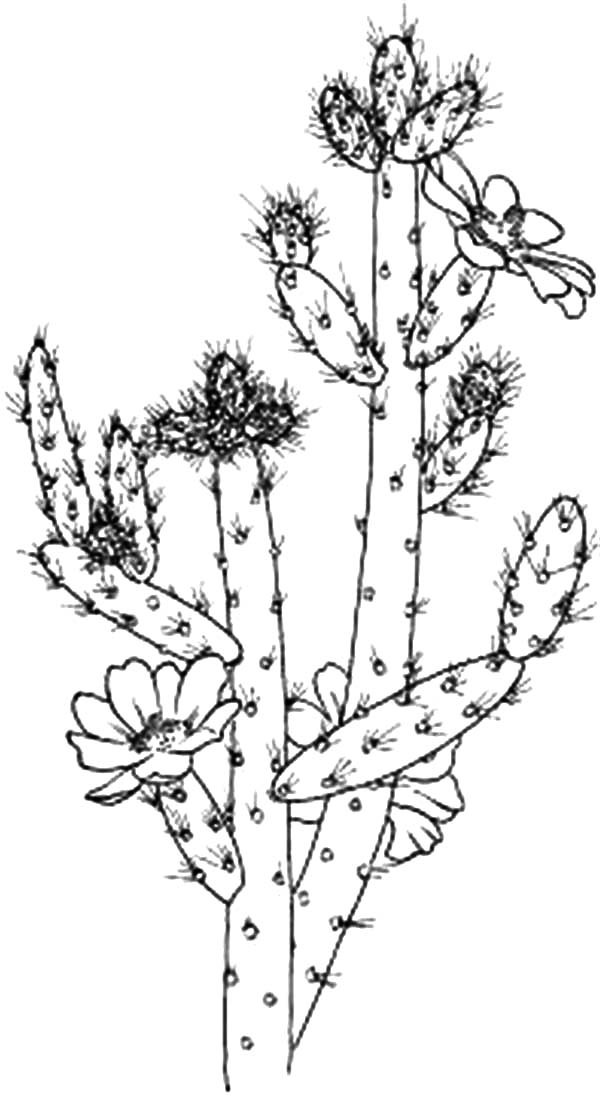 cactus cactus flower coloring pages