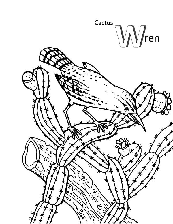 Cactus, : Cactus Wren and a Bird Coloring Pages