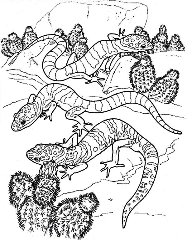 Cactus, : Cactus and Lizard Desert Coloring Pages