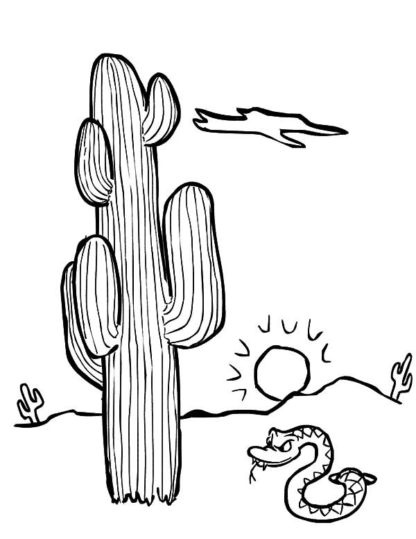 Cactus, : Cactus and Rattle Snake Coloring Pages