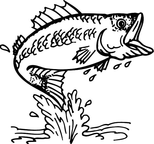 Bass Fish, : Cathing Bass Fish Coloring Pages