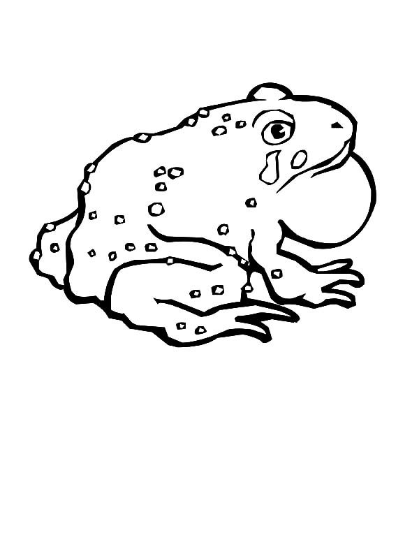 Bullfrog, : Crying Sad Bullfrog Coloring Pages