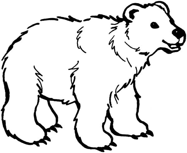 Brown Bear, : Dangerous Brown Bear Coloring Pages