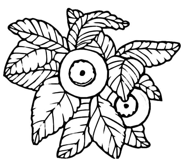 Blueberry Bush, : Drawing Blueberry Bush Coloring Pages