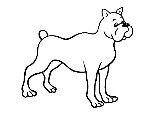 Boxer Dog, : Drawing Boxer Dog Coloring Pages