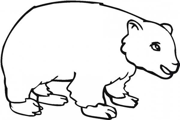 Brown Bear, : Drawing Brown Bear Coloring Pages