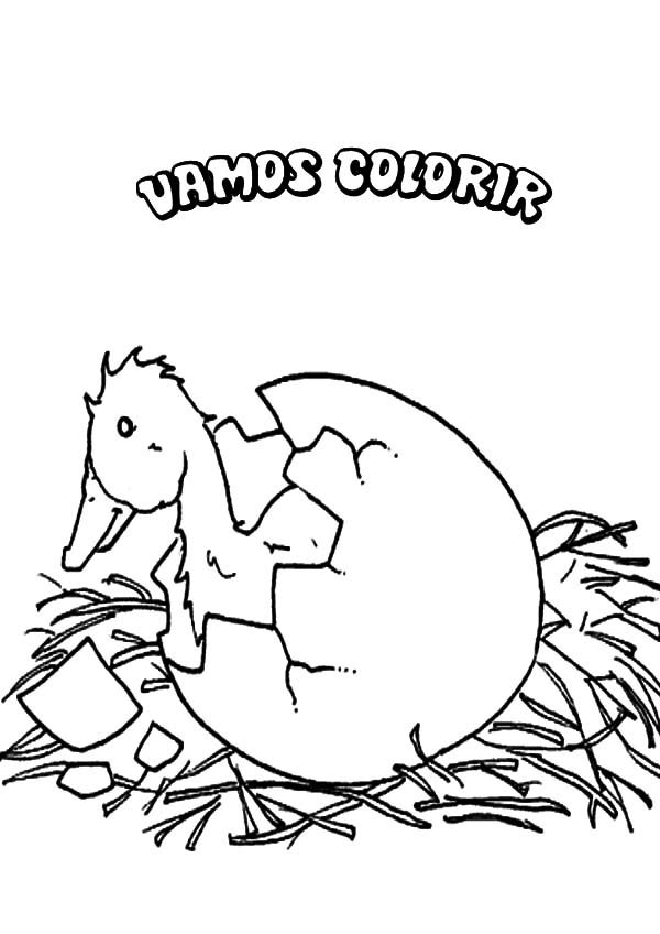Broken Egg, : Duckling Broken Egg Coloring Pages