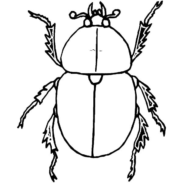 Beetle, : Dung Beetle Coloring Pages