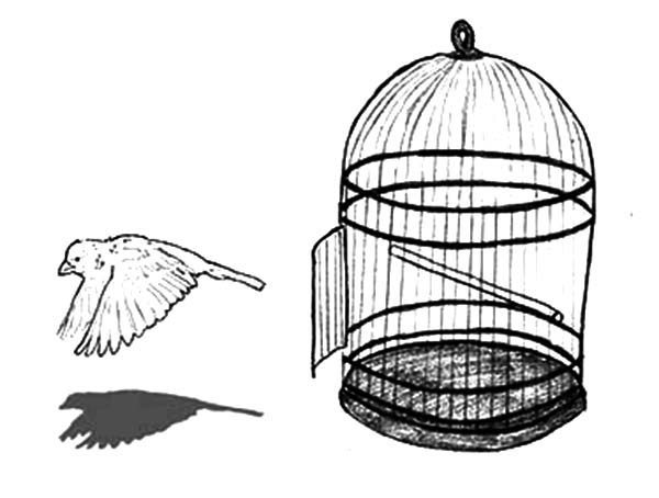 bird cage coloring pages - photo#19