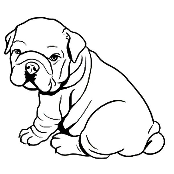 Bulldog, : Fat Bulldog Like Towel Coloring Pages