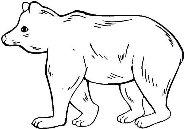 Brown Bear, : Female Brown Bear Coloring Pages