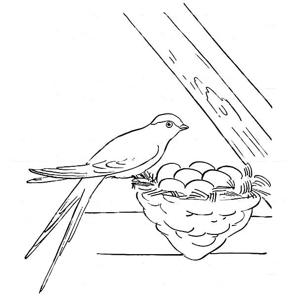 Bird Nest, : Female Swallow Bird Perched on its  Bird Nest with Eggs Coloring Pages