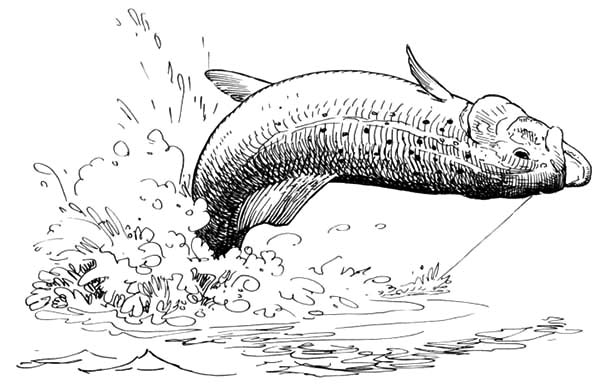 Fishing Apache Trout Coloring Pages