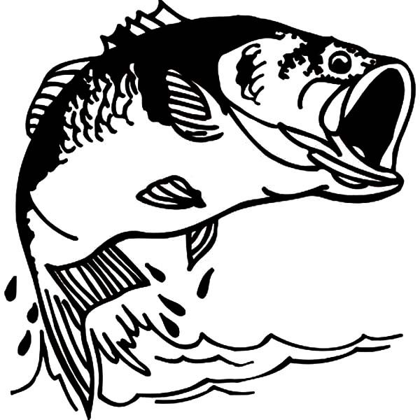 Bass Fish, : Fishing Bass Fish Coloring Pages