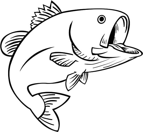 Bass Fish, : Fishing Fun Bass Fish Coloring Pages