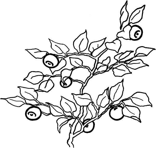 Blueberry Bush, : Full of Vitamin Blueberry Bush Coloring Pages