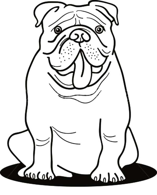 Bulldog, : Funny Bulldog Coloring Pages