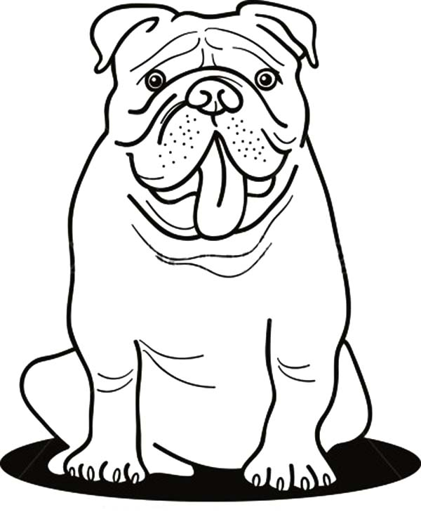 free printable bulldog coloring page bulldogs free coloring pages