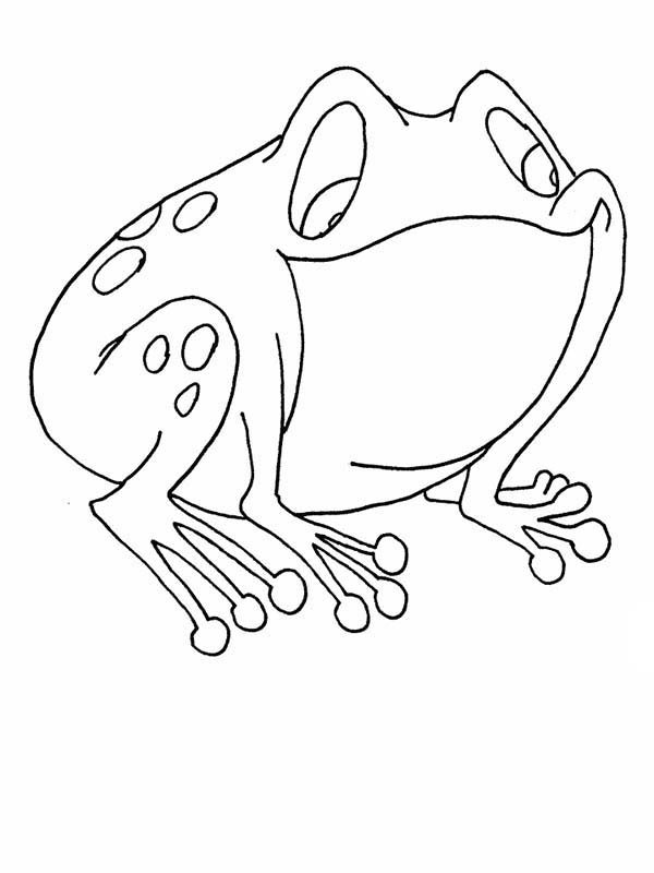Bullfrog, : Funny Shaped Bullfrog Coloring Pages