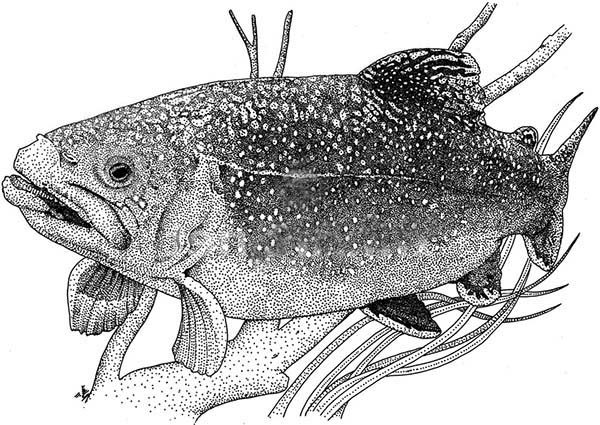 Apache Trout, : Giant Apache Trout Coloring Pages