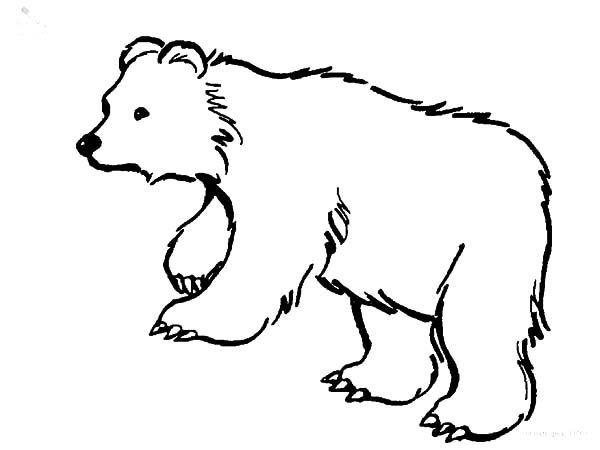 Brown Bear, : Hairy Brown Bear Coloring Pages