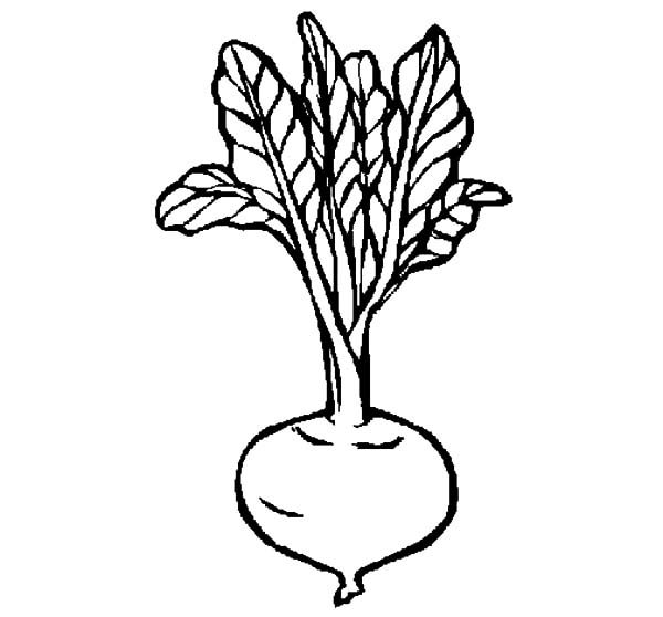 Beets, : Healthy Beets Coloring Pages