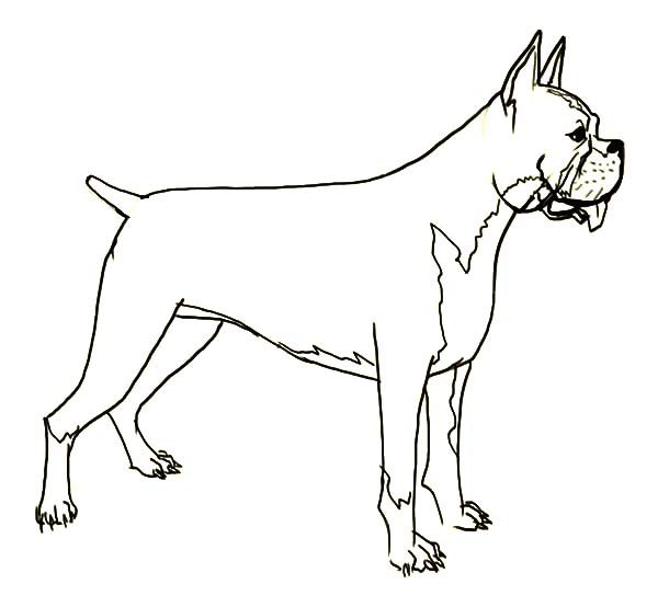 Boxer Dog, : Hideous Boxer Dog Coloring Pages