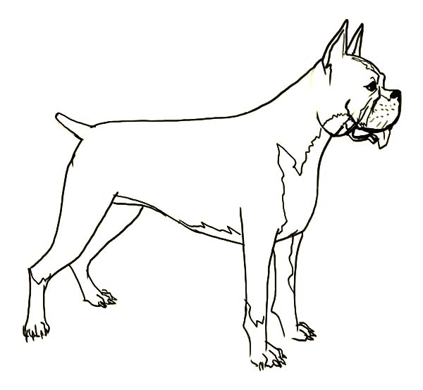 How To Draw A Boxer Dog Easy