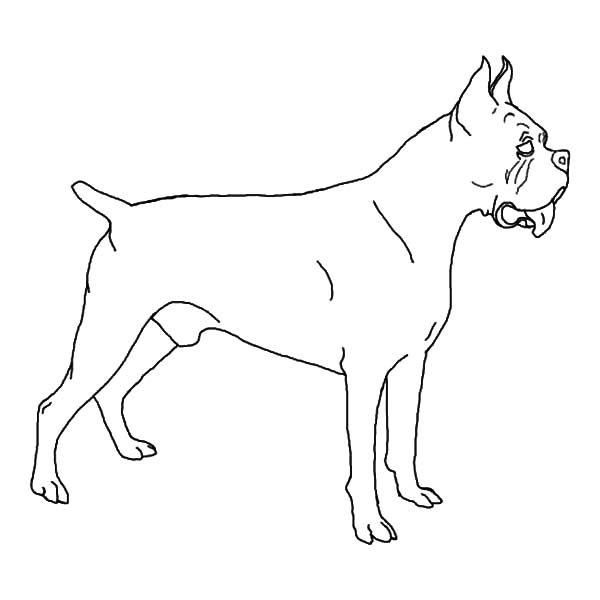 Boxer Dog, : How to Draw Boxer Dog Coloring Pages
