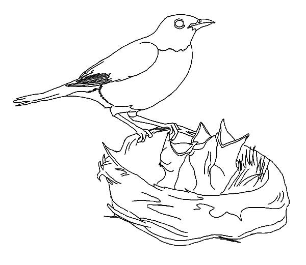 Bird Nest, : Hungry Baby Bird in Bird Nest Coloring Pages