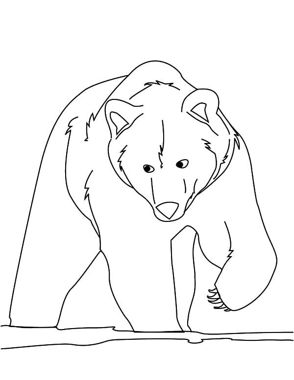 Brown Bear, : Hungry Brown Bear Coloring Pages