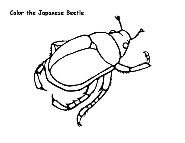 Beetle, : Japanese Beetle Coloring Pages