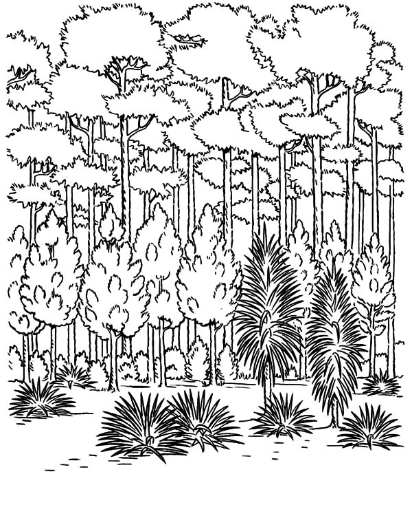 forest of trees coloring pages - photo#17