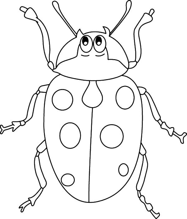 Beetle, : Ladt Bug Beetle Coloring Pages