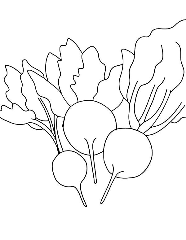 Beets, : Learn about Beets Coloring Pages