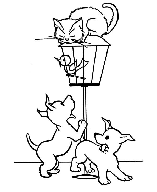 Bird Cage, : Little Bird Locked in Bird Cage Coloring Pages