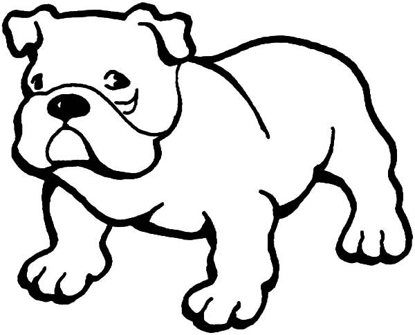 Bulldog, : Little Bulldog Coloring Pages