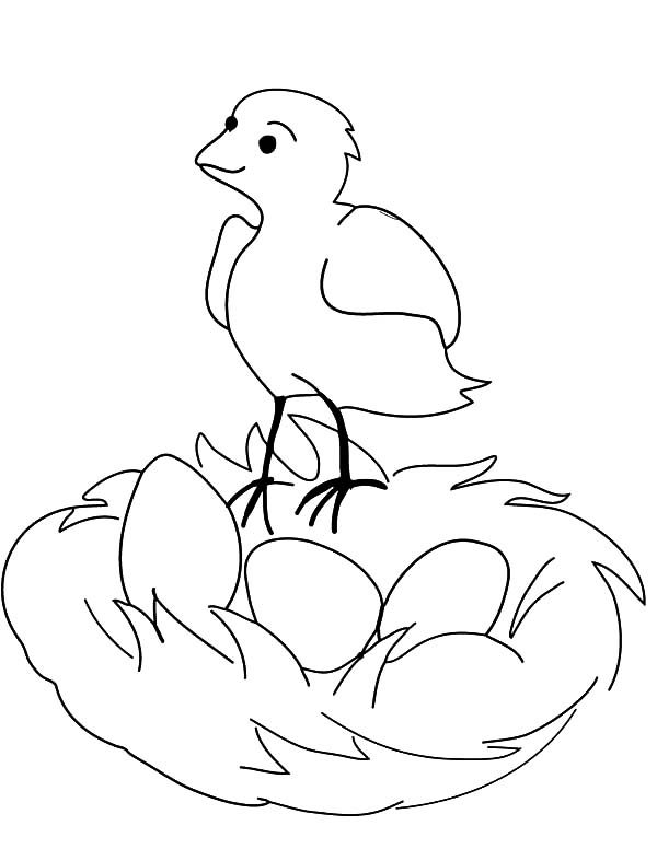 Bird Nest, : Little Put Her Eggs in Bird Nest Coloring Pages