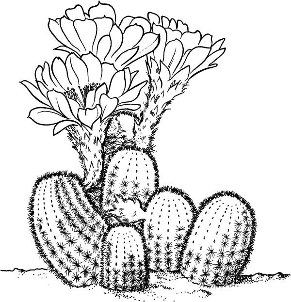 cactus coloring pages plants - photo#43