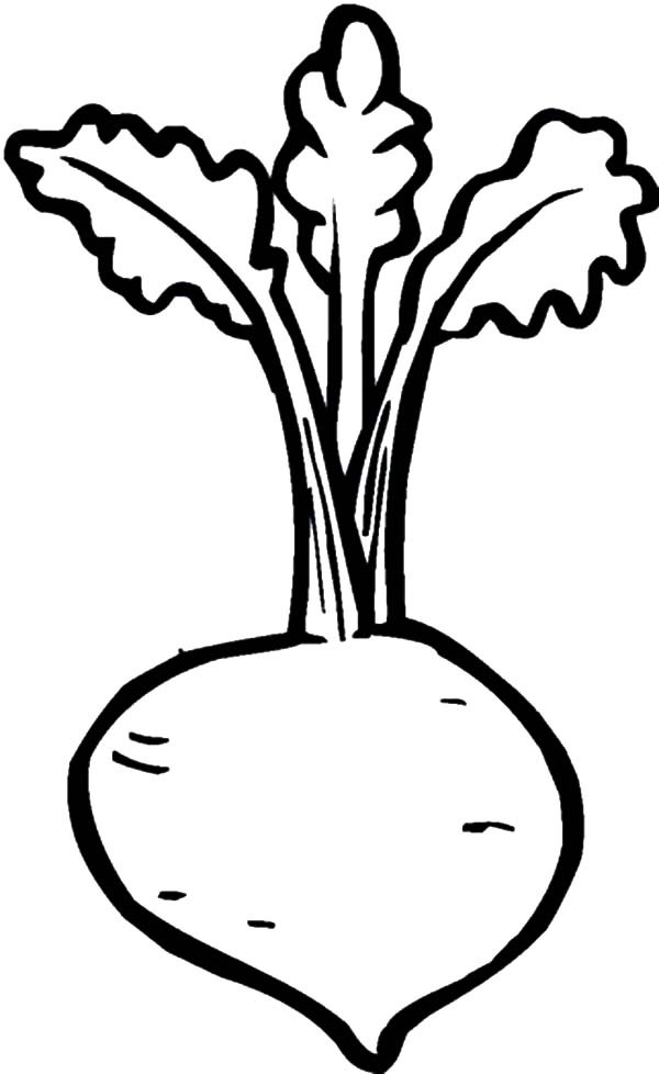 Beets, : Medicine Plant Beets Coloring Pages