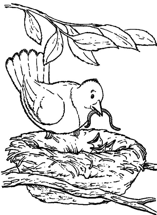 Bird Nest, : Mother Bird Feeding Her Babies with a Caterpillar in Bird Nest Coloring Pages