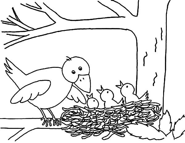 Bird Nest Mother Put Her Babies In Coloring Pages