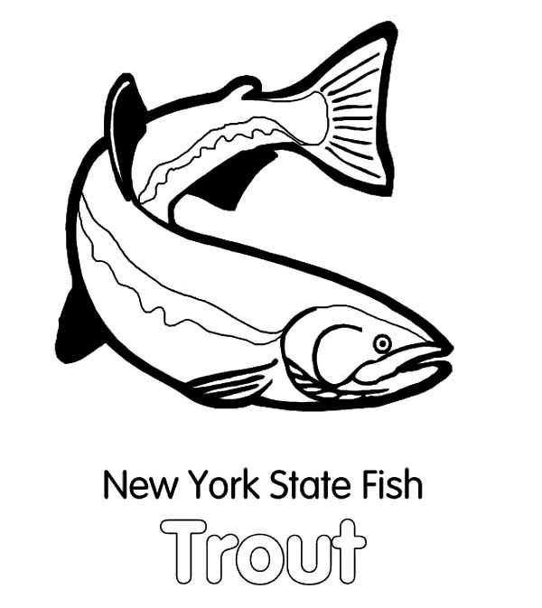 Apache Trout, : New York State Fish Apache Trout Coloring Pages