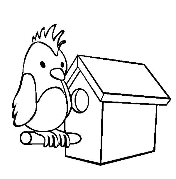Bird House, : Parrot Bird House Coloring Pages