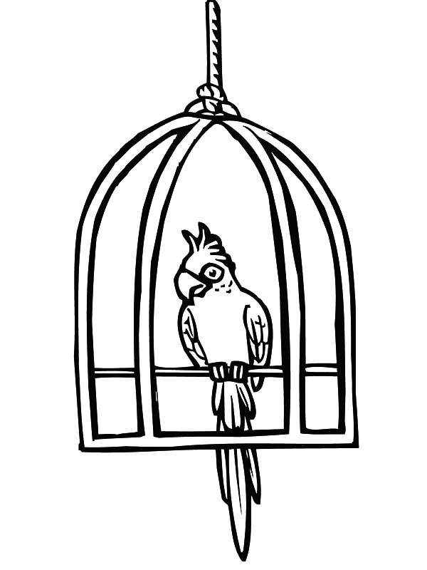 Bird Cage, : Parrot Cute Bird Cage Coloring Pages