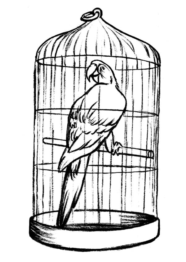 Bird Cage, : Parrot in Bird Cage for Sale Coloring Pages