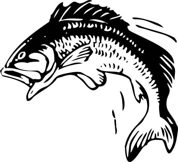 Bass Fish, : Picture of Bass Fish Coloring Pages