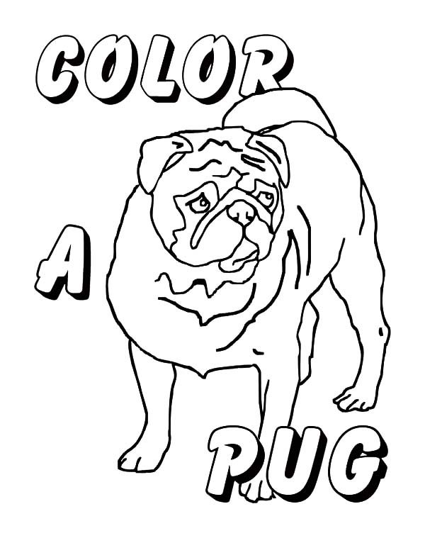 Boxer Dog, : Picture of Boxer Dog Coloring Pages