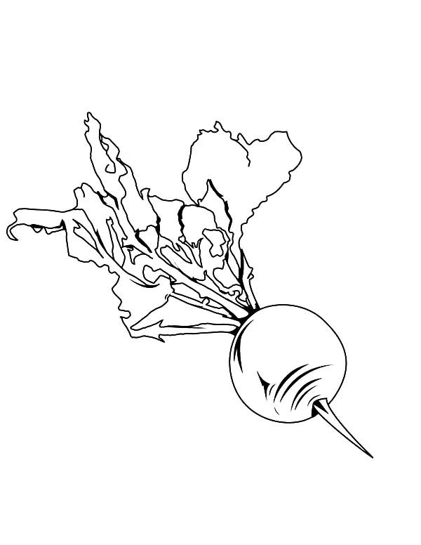 Beets, : Planting Beets Coloring Pages